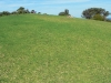 Mona Vale Headland Reserve