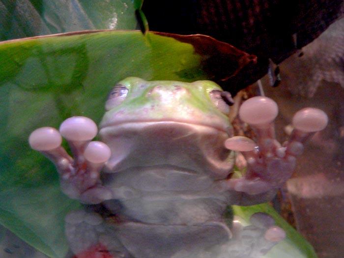 Frog at Taronga Zoo