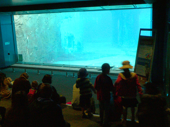 Penguin Keeper Talk at Taronga Zoo